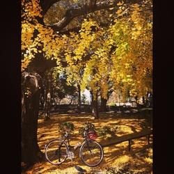 ランドナーで都内の公園の紅葉めぐり
