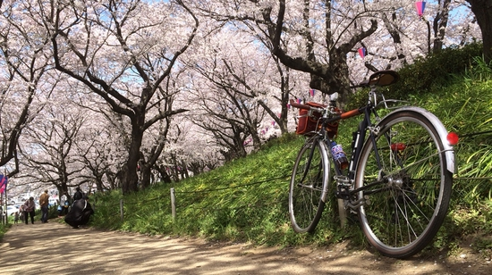桜堤の内部を通ってみました