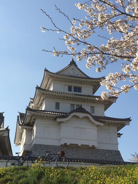 関宿城の桜も満開でした
