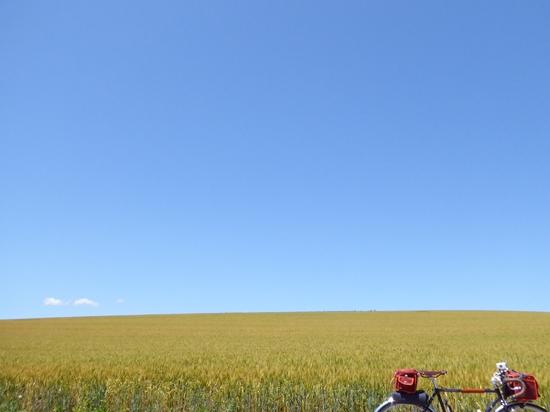 どこまでも続く一面の小麦畑