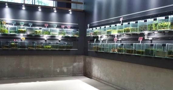 淡水魚館の水生昆虫の展示